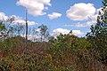 Parque Nacional de Brasília (14358967588).jpg