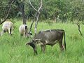 Parque nacional Aguaro-Guariquito 047.jpg