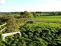 Pasture land near Hawkshill Farm - geograph.org.uk - 1035965.jpg