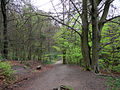 Path through the Limb Valley - geograph.org.uk - 411422.jpg