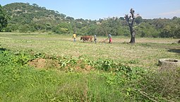 People working on the land in a village in Buhera District, Manicaland, Zimbabwe.jpg