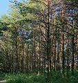 Pereslavl Arboretum R45.jpg