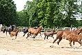 Pferde Graditz.jpg