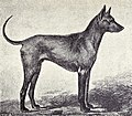 Phu-Quoc Greyhound from 1915.JPG