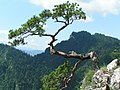 Pieniny - Sokolica - panoramio.jpg