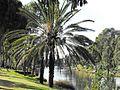 PikiWiki Israel 15307 Tel-Aviv - Yarkon park.jpg