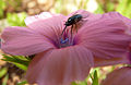 PikiWiki Israel 30420 Plants of Israel.jpg