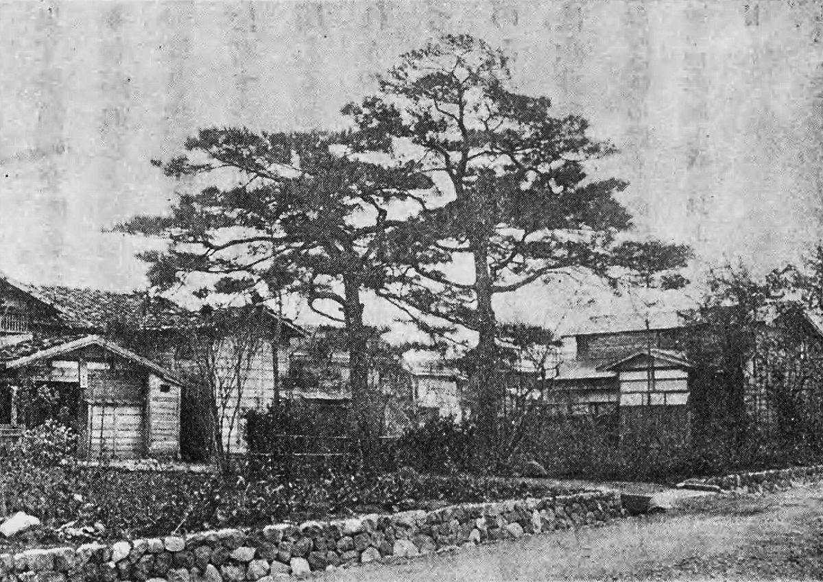 Pine trees Kawai House.jpg