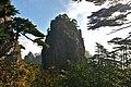 Pinus hwangshanensis, Huangshan 2.jpg