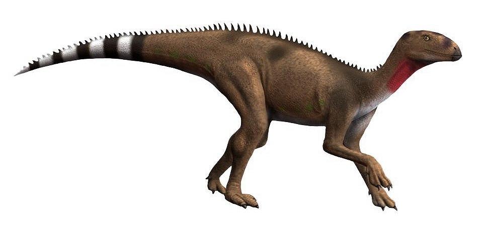 Pisanosaurus NT small