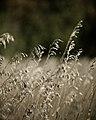 Plant (2955845712).jpg