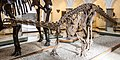 Plateosaurus engelhardti, Munich, 2017-09-11.jpg