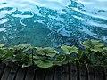 Plitvička jezera 0025.jpg