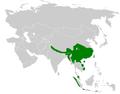 Pnoepygidae distribution map.png