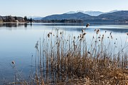 Poertschach Hans-Pruscha-Weg Uferzone Schilfrohr 08032017 6482.jpg
