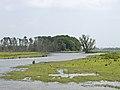 Polder in de Biesbosch.jpg