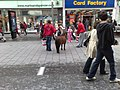 Pony in city centre - panoramio.jpg