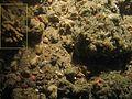 Porifera Arborescent WBRF CEND0313 MP11 STN 134 A1 005.JPG