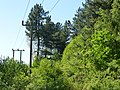 Power lines heading to Bellmoor Quarry - panoramio.jpg