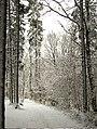 Praha, Kunratice, zasněžený Kunratický les V.jpg