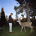 President Kennedy Feeds Deer (74644bc4-e95e-4541-a69c-2cb6b483edf1).jpg