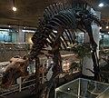 ProbactrosaurusGobiensis-PaleozoologicalMuseumOfChina-May23-08.jpg