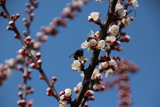 Pszczoła 2020 02.JPG