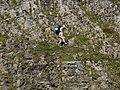 Pyrenees - Parque Nacional de Ordesa y Monte Perdido - vertical descent - panoramio.jpg