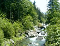 Mountain stream in the summer.