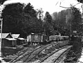 Railroad logging camp, National Lumber and Manufacturing Company, probably in Grays Harbor County, ca 1923 (KINSEY 1134).jpeg