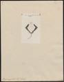 Raja marginata - 1700-1880 - Print - Iconographia Zoologica - Special Collections University of Amsterdam - UBA01 IZ14200069.tif