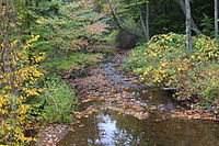 Rattling Run looking downstream.JPG