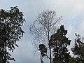 Ravangla, Sikkim by Masum Ibn Musa (142).jpg