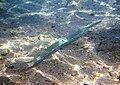 Red sea-reef 3769.jpg