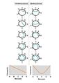 Replicación unidireccional vs bidireccional.png