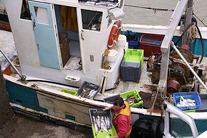 Retour de la pêche du chalutier L' Entracte II (6).JPG