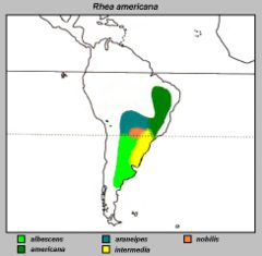 Mapa de distribuição das subespécies de ema na América do Sul.