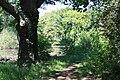 Rhododendronpark Bremen 20090513 280.JPG