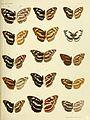 Rhopalocera Malayana BHL9346086.jpg
