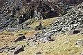 Rhos Quarry Ruins - geograph.org.uk - 222543.jpg