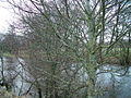 River Eden through the trees - geograph.org.uk - 649245.jpg