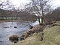 River Swale near East Applegarth - geograph.org.uk - 1711802.jpg