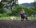 Rodeo Event Calf Roping 06.jpg