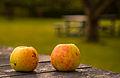 Rosendals Trädgård Apples (15188068748).jpg