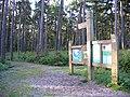 Rowney Warren pine woodland, Southill, Beds - geograph.org.uk - 174146.jpg