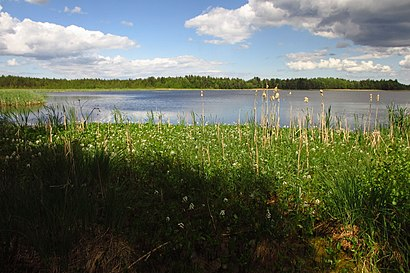 How to get to Rummu Järv with public transit - About the place