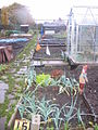 Ruskin Rd Allotment - geograph.org.uk - 1168326.jpg