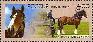 Vladimir Heavy Draft Russian breed of draught horse
