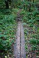 Söderåsen - panoramio (9).jpg