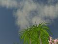 SL - ciel bleu et palmiers virtuels.png